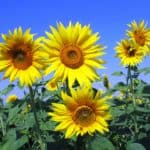 Ways to Keep Your Garden in Check This Summer