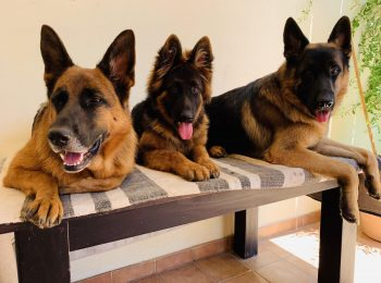 Euro Puppy - An Exclusive company for Specialist Purebred Puppy Lovers 6